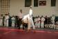 judo-lok-051